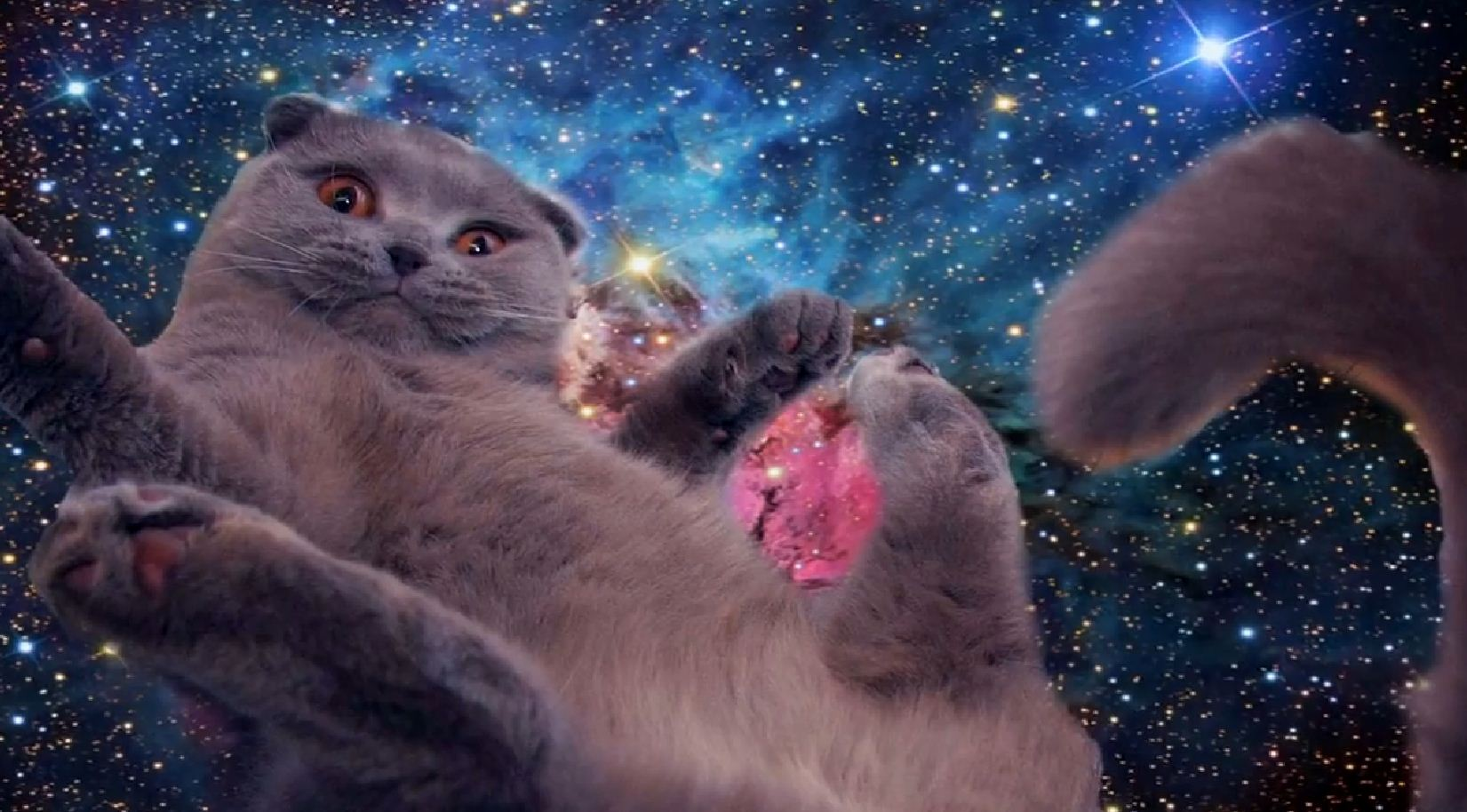 Space cats physics4me - Space kitty wallpaper ...