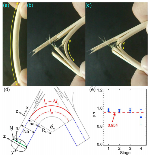 The sounds made when a bamboo chopstick is broken follow the three main power laws that describe earthquakes, yet scientists also show that they can explain this power law behavior using geometry